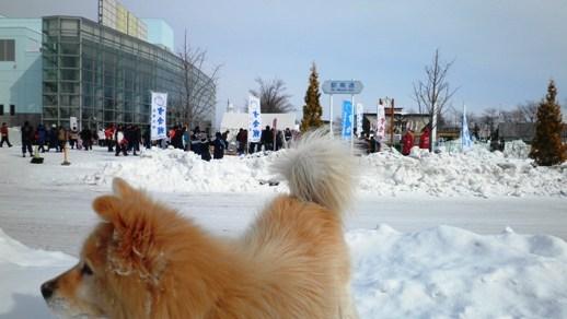 01 2月11日冬祭り - コピー.JPG