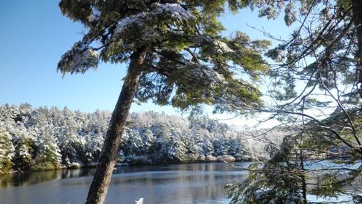 08 雪の白駒池を散策 - コピー.JPG